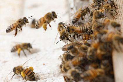 Огромный рой агрессивных пчел оккупировал жилой дом