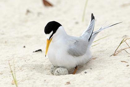 Пляжных волейболистов посчитали причиной гибели птиц в США