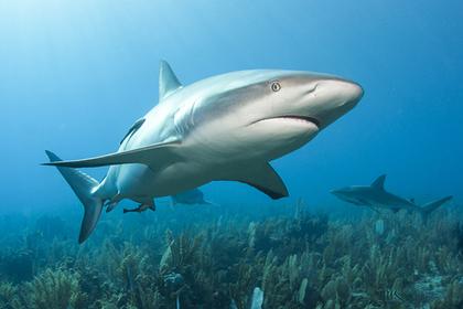 Акула едва не лишила руки поймавшего ее рыбака