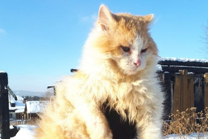 Российский кот полтора года прожил на месте пожара в ожидании погибшей хозяйки