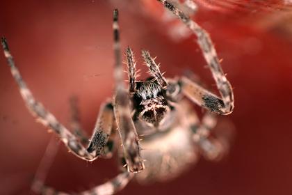 Ядовитый паук прожег в ноге мальчика дыру