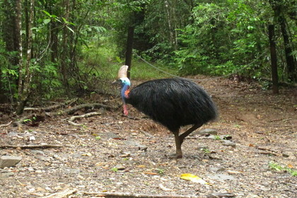 «Самая опасная птица в мире» убила хозяина-фермера