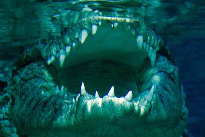 Крокодил съел заживо приехавшего на похороны парня