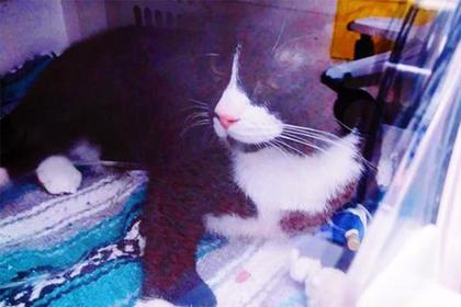 Кот выжил после часовой стирки в машинке
