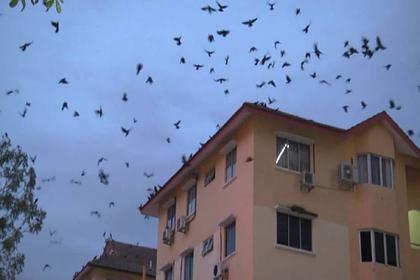 На популярном курорте забили тревогу из-за фекальных птичьих «бомбардировок»