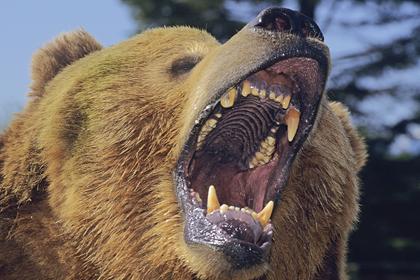 Медведь залез в дом и загрыз россиянина