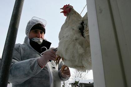 Инфекционист прокомментировал первое в мире заражение людей птичьим гриппом H5N8