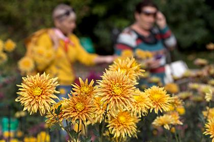 В Крыму подготовили фотозону из живых цветов к Балу Хризантем